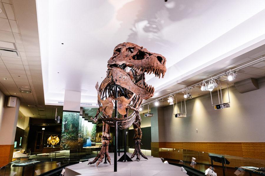 ETC T Rex Sue Field Museum Chicago PLS
